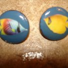 Set of 2 mother of pearl buttons with colorful tropical fish.