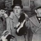 Three Stooges Skunks Poster 27x38