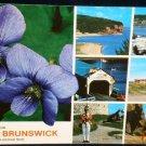 Greetings New Brunswick Purple Violet Postcard Used