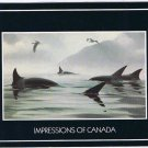 British Columbia Laminated Postcard RPPC Orca Killer Whales Masters of the Inlet
