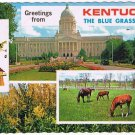 Kentucky Postcard Blue Grass State Multi View Horses