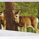 Animal Laminated Postcard RPPC Mule Deer