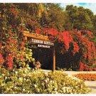 St Petersburg Florida Postcard Sunken Gardens