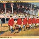 Miami Florida Postcard Greyhounds West Flagler Kennel Club Dog Track Curteich