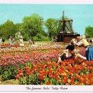 Holland Michigan Postcard Nelis Tulip Farm Kissing Couple Curteich 1955 5C-K2517