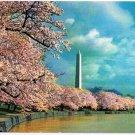 Washington DC Postcard Washington Monument Cherry Blossoms