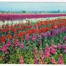 Arizona Postcard South Mountain Flower Gardens