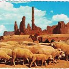 Monument Valley Arizona Postcard Flock Sheep On The Dunes