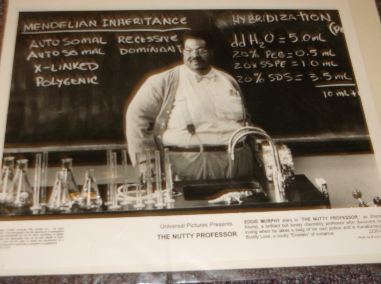 Eddie Murphy signed 10x8 photo Nutty Professor