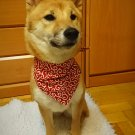 "Dog Bandana for Japanese KARAKUSA ""Small-patterned Red"""