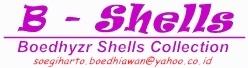 B-Shells