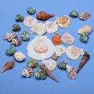 Aquarium Fish Tank Beach Sea Shell Craft Decoration 130g