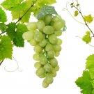 Artificial Grapes Decorative Plastic Fake Fruit