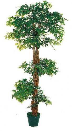 Mini Arelixa Tree 5ft