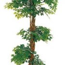 Aster Tree 5ft