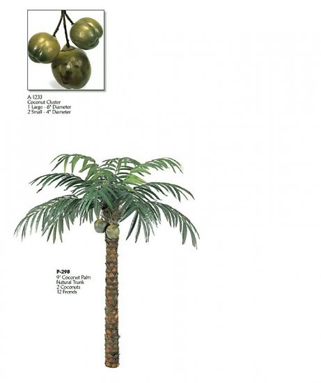 Coconut Palm Tree  (9 feets tall)