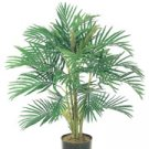 Areca Palm (3 feets tall)