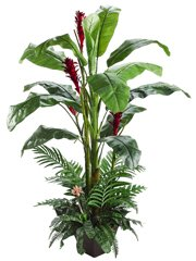 Guzmania, Heliconia, Areca, Banana Tropical Plant Silk Tree