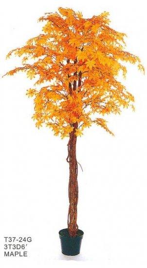 Tan Maple Tree