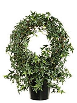 Circle Ivy Topiary