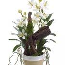 Dendrobium Orchid Floral Arrangement