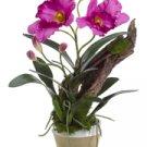 Silk Cattleya Orchid