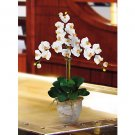 Triple Stem Phalaenopsis Silk Orchid Flower Arrangement -  Cream
