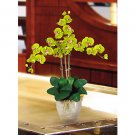 Triple Stem Phalaenopsis Silk Orchid Flower Arrangement -  Green