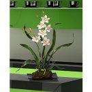 Cymbidium w/Black Rectangle Dish
