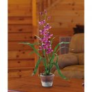 Cymbidium w/White Wash Pot (Purple)