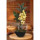 Dendrobium Pendulum w/Classic Black Vase (Yellow)