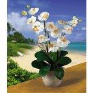Double Stem Phalaenopsis Silk Flower Arrangement (Cream)