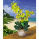 Double Stem Phalaenopsis Silk Flower Arrangement (Green)