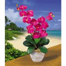 Double Stem Phalaenopsis Silk Flower Arrangement (Beauty)