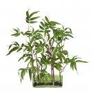 Bamboo w/Glass Planter