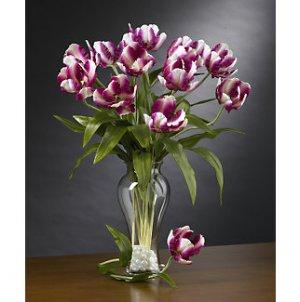 Parrot Tulips Stems (12 Stems) - Raspberry