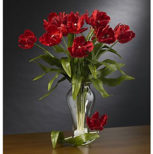 Parrot Tulips Stems (12 Stems) - Red