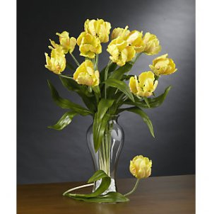 Parrot Tulips Stems (12 Stems) - Yellow