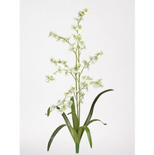 Dancing Lady Silk Orchid Flowers (6 Stems) - Green