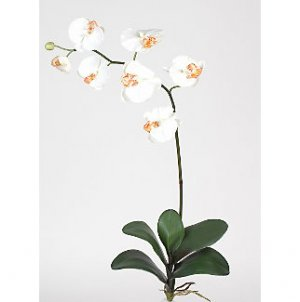 Phalaenopsis Orchid Silk Flowers (6 Stems) - Cream