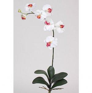 Phalaenopsis Orchid Silk Flowers (6 Stems) - White