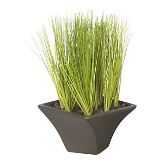 "9"" Potted Grass w/Black Vase"