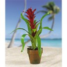 Potted Single Sword Bromeliad - American Beauty