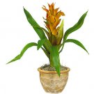 Single Star Bromeliad Silk Arrangement -Orange Peach