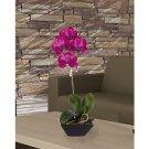 Phalaenopsis w/Classic Black Vase - Orchid