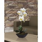 Phalaenopsis w/Classic Black Vase - White