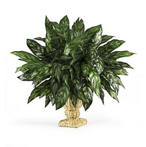 Silver King w/Decorative Basket Silk Plant