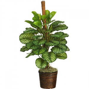 "43"" Calathea Silk Plant (Real Touch)"