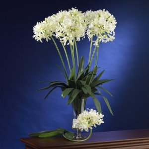 """29"""" African Lily Stem (Set of 12) - White"""