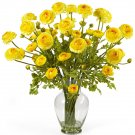 Ranunculus Liquid Illusion - Yellow